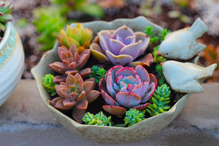 Our ceramic pots are perfect for your home