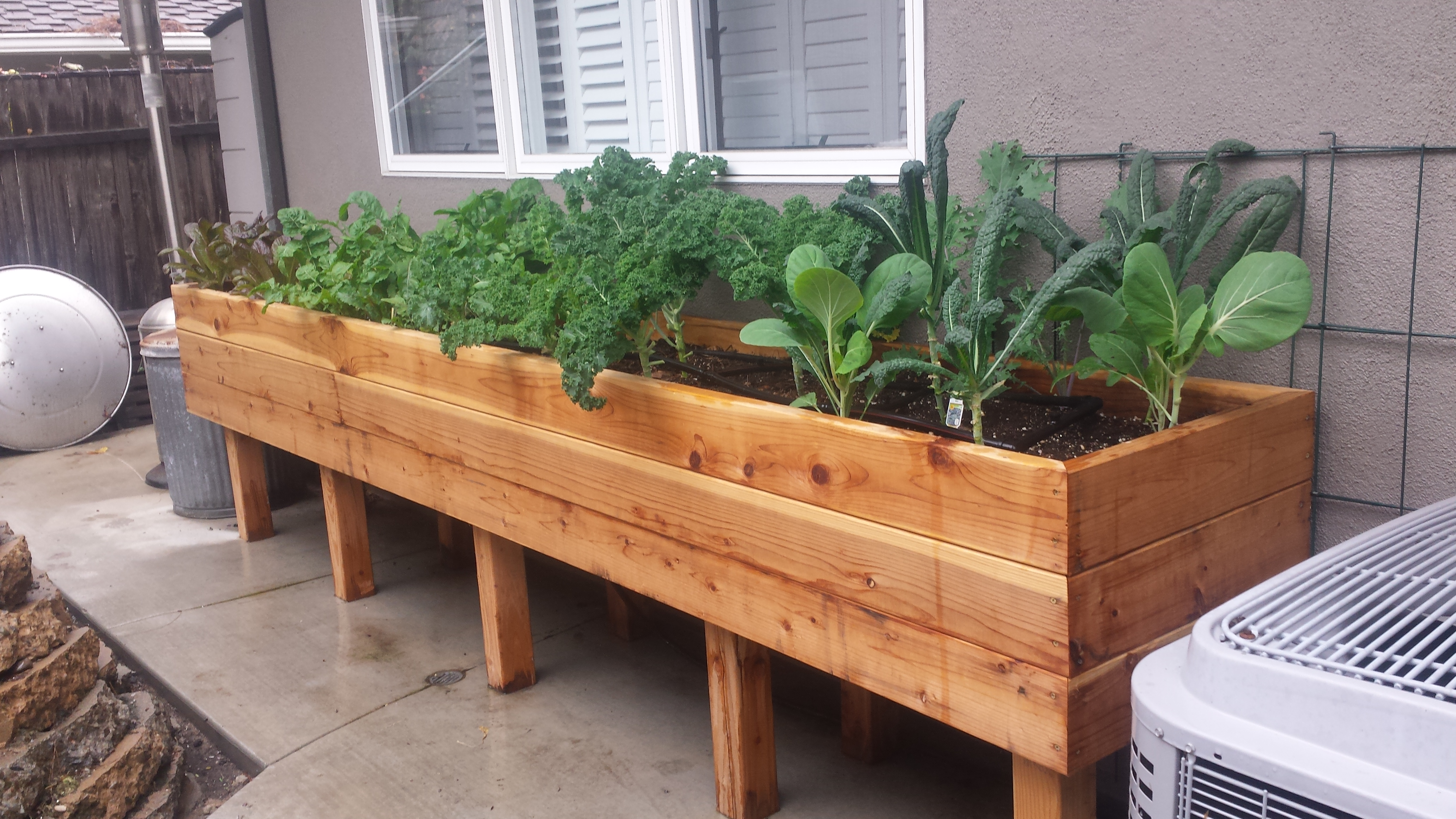 A raised bed garden makes planting easy