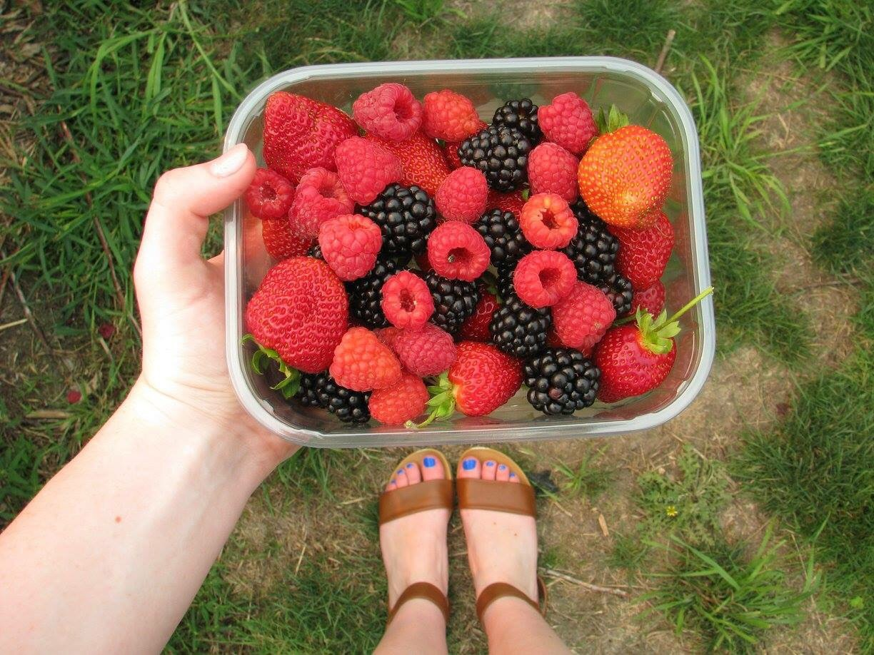 delicious homegrown berry patches