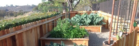 Try a raised bed garden in your home