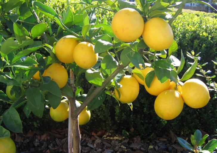 Harvest to Home fruit tree nursery