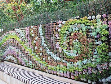 Succulent Walls