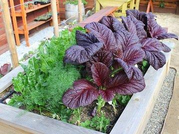 Vegetable Garden Service